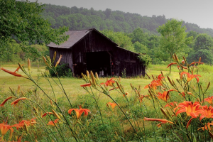 Meadow with flowers and old barn